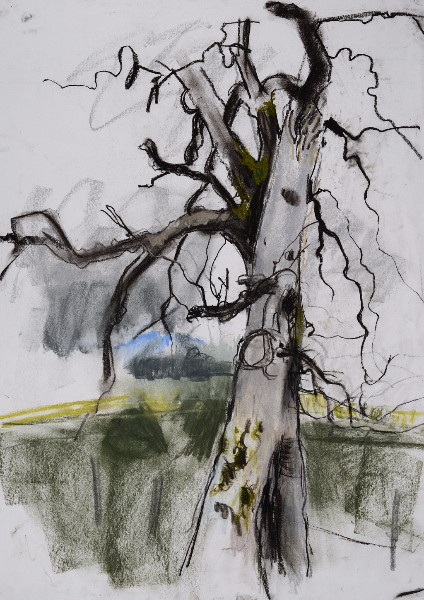 Entwined Trees - Emerging Spring