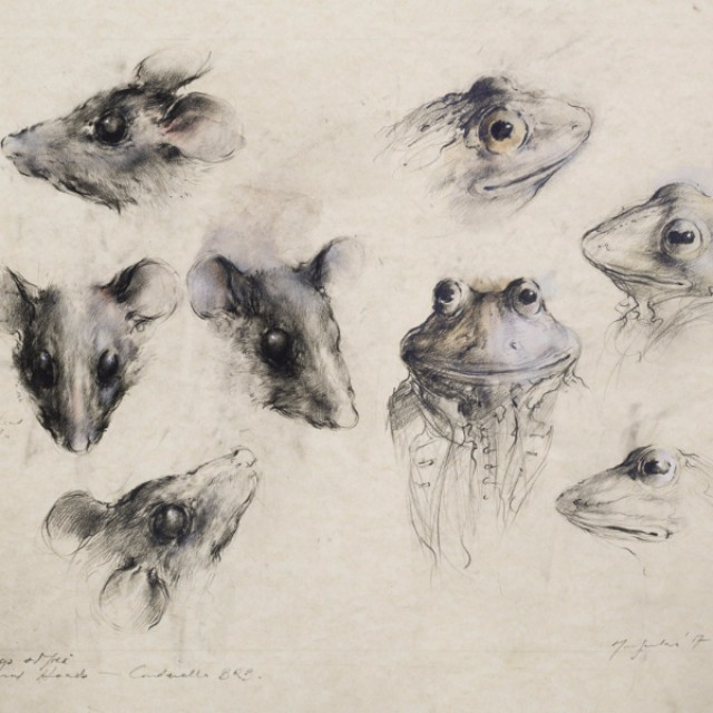 Animal Heads, Cinderella