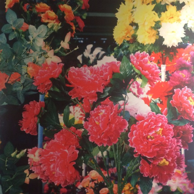 big-flowers-marie-anine-moller1
