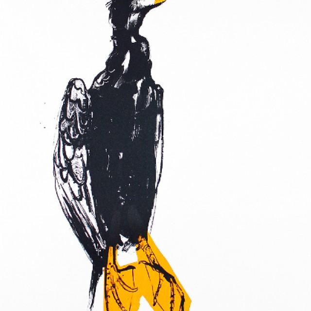 Orange Cormorant