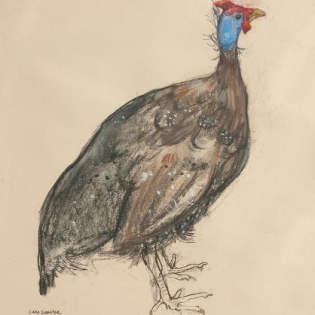 Guinea Fowl £500