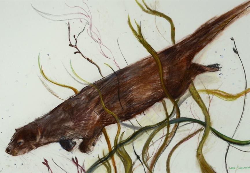 Diving Otter