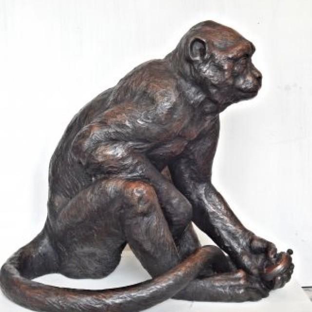 The Timekeeper (Macaque monkey)