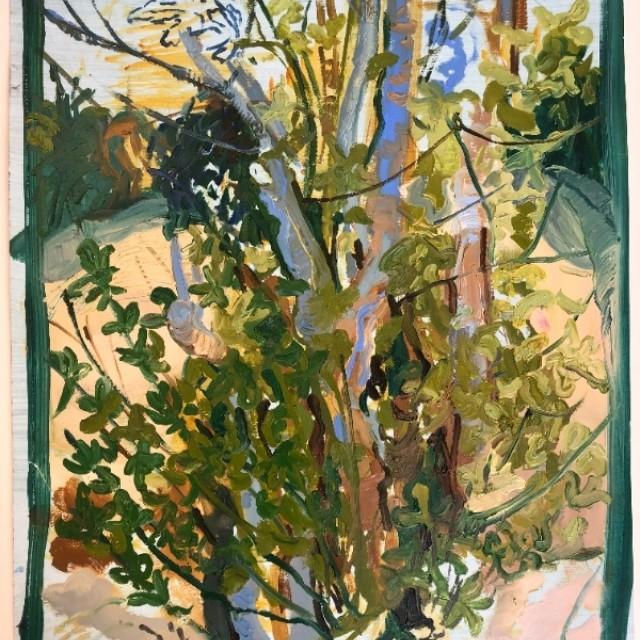Fig tree, Pignano