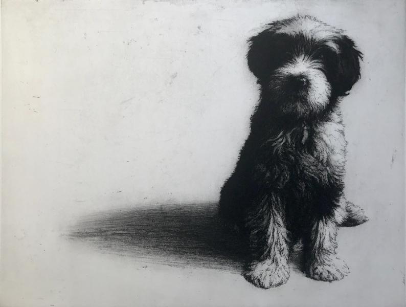 Magnus, Tibetan terrier puppy
