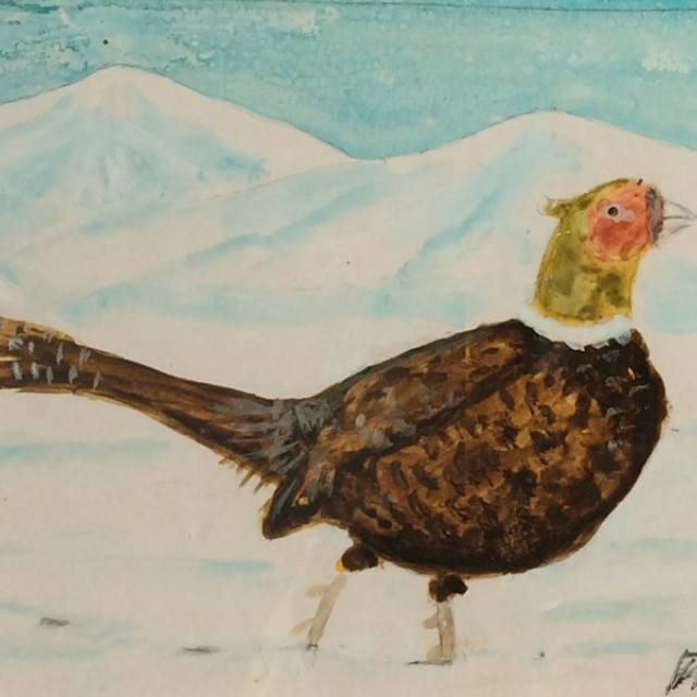 Pheasant in the wilderness
