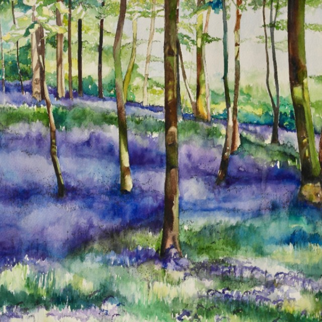 Bluebells, Pollok Park