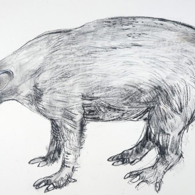 Arrdvark