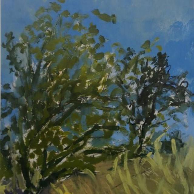 Olive Trees on the Hillside, Pignano